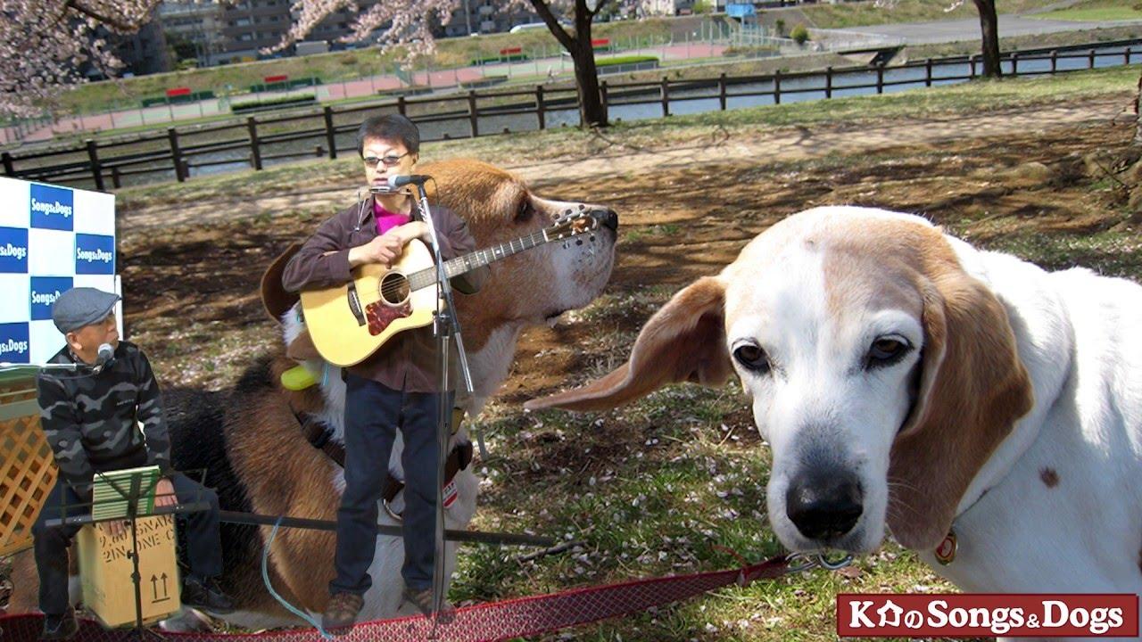 111th: K介のSongs&Dogs週末はミュージシャン