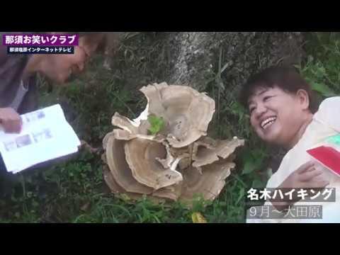 大田原9月の名木ハイキング~那須お笑いクラブ