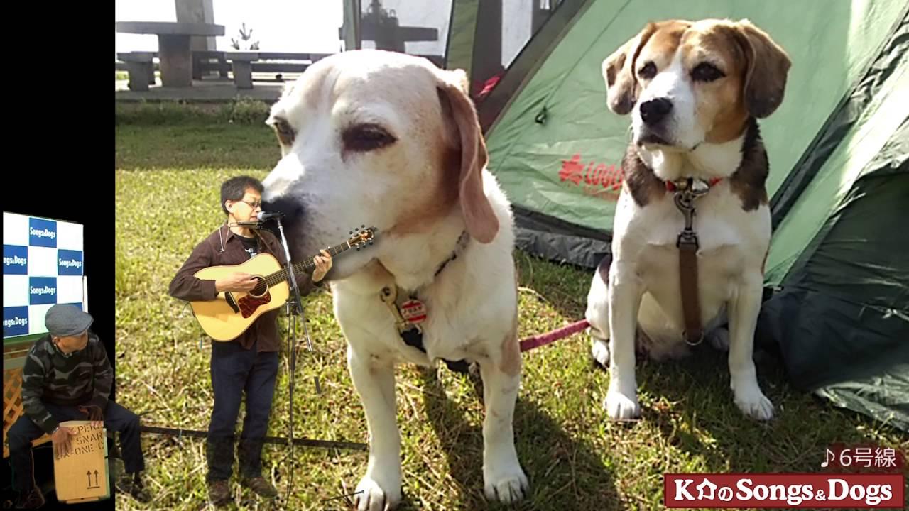 115th: K介のSongs&Dogs週末はミュージシャン