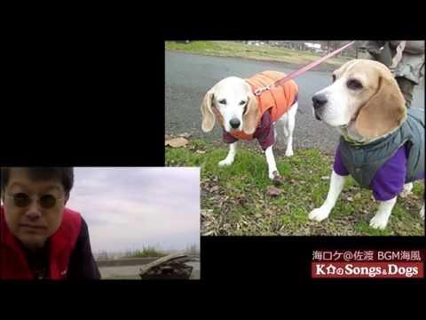 116 th: K介のSongs&Dogs週末はミュージシャン