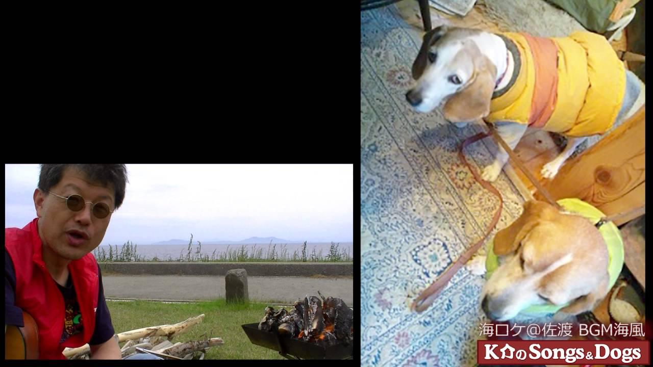 117th: K介のSongs&Dogs週末はミュージシャン