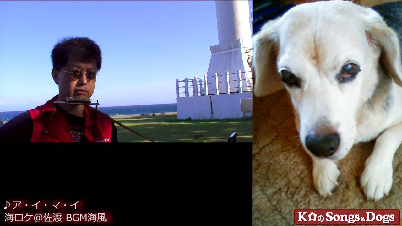 118th: K介のSongs&Dogs週末はミュージシャン