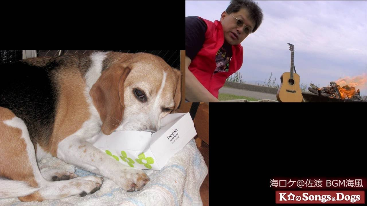 122th: K介のSongs&Dogs週末はミュージシャン