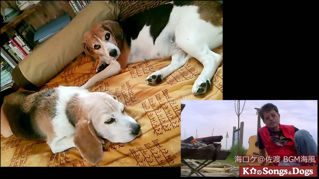 123th: K介のSongs&Dogs週末はミュージシャン