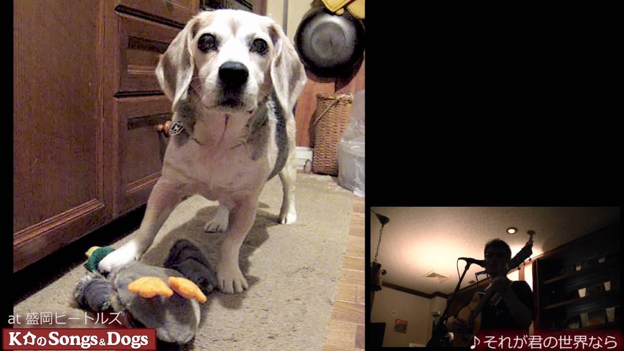 132th: K介のSongs&Dogs週末はミュージシャン