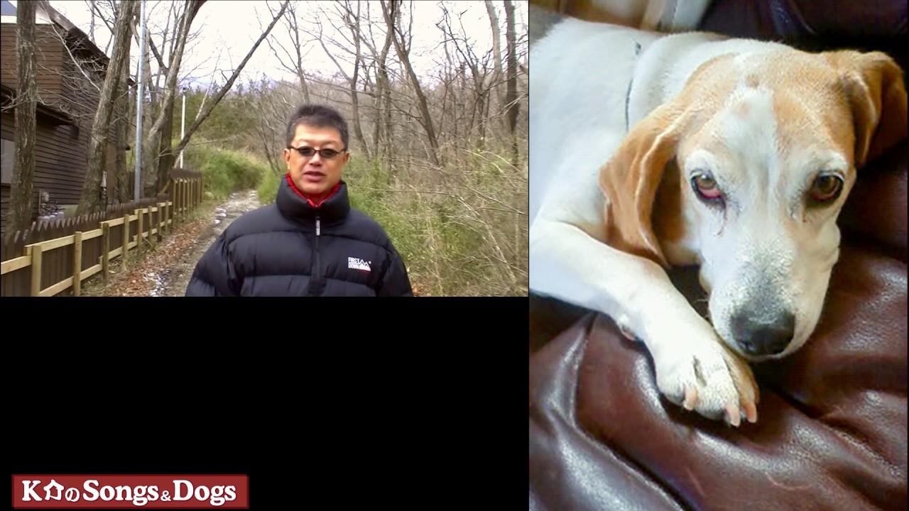 150th: K介のSongs&Dogs週末はミュージシャン