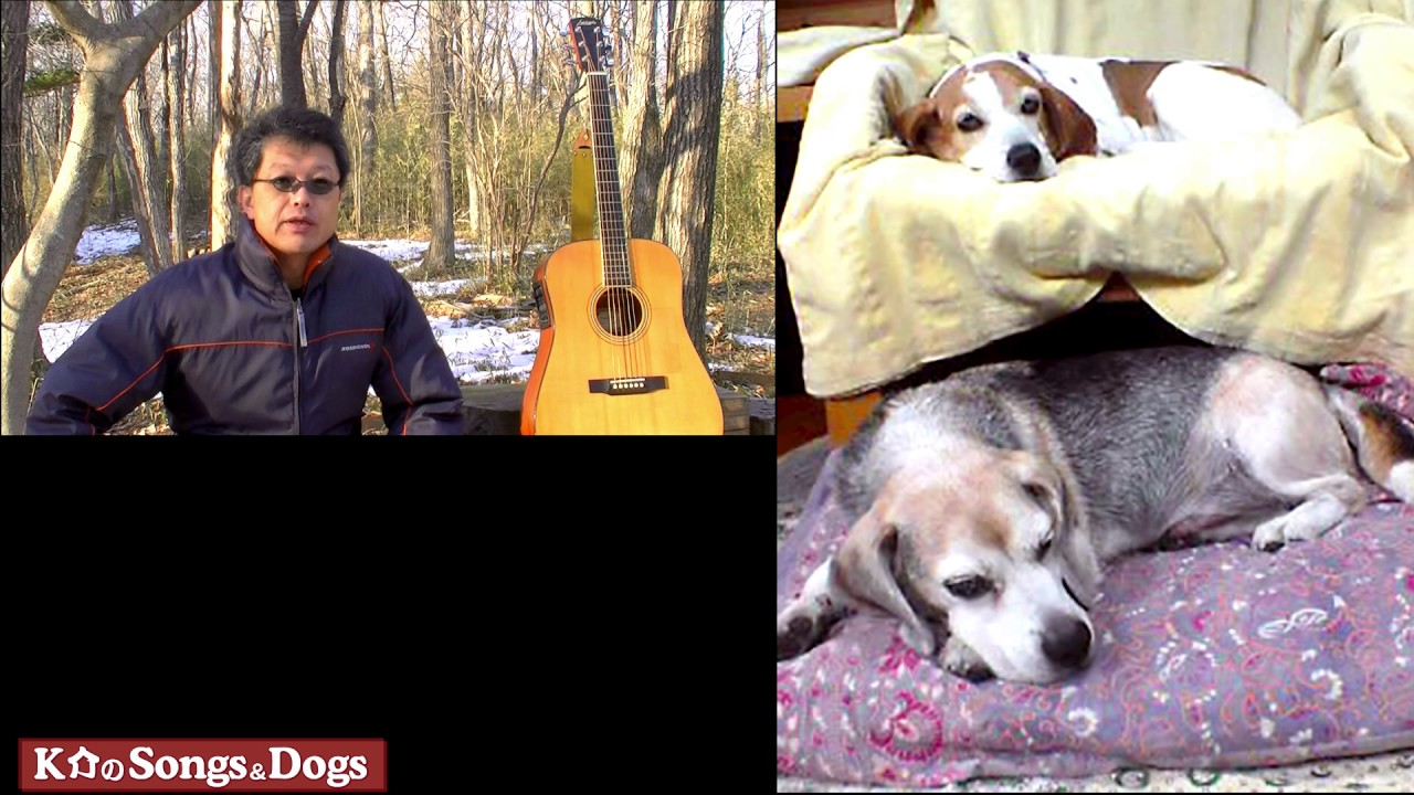 161th: K介のSongs&Dogs週末はミュージシャン