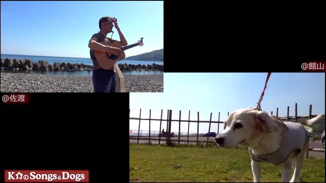 175th: K介のSongs&Dogs週末はミュージシャン