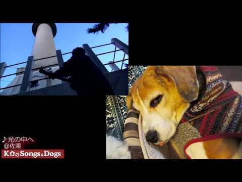 201th: K介のSongs&Dogs週末はミュージシャン
