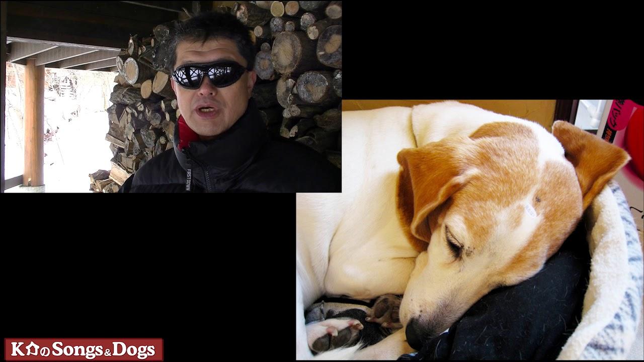 205th: K介のSongs&Dogs週末はミュージシャン