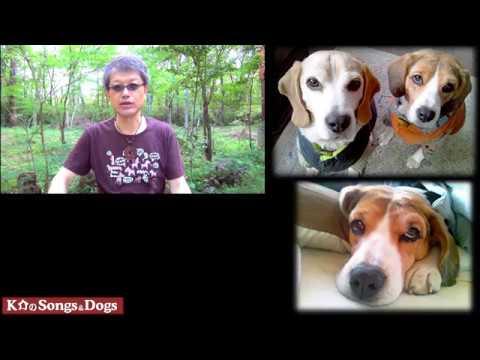 238th: K介のSongs&Dogs週末はミュージシャン