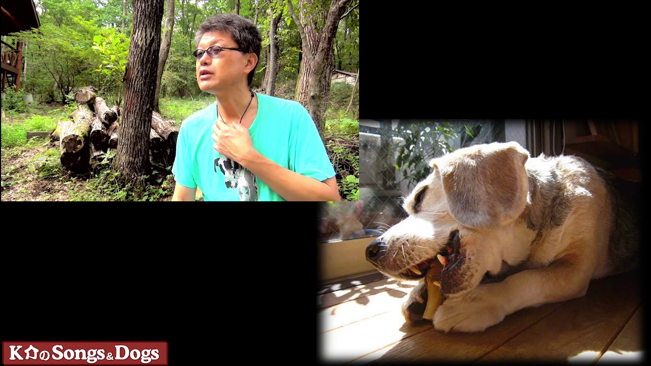 239th: K介のSongs&Dogs週末はミュージシャン