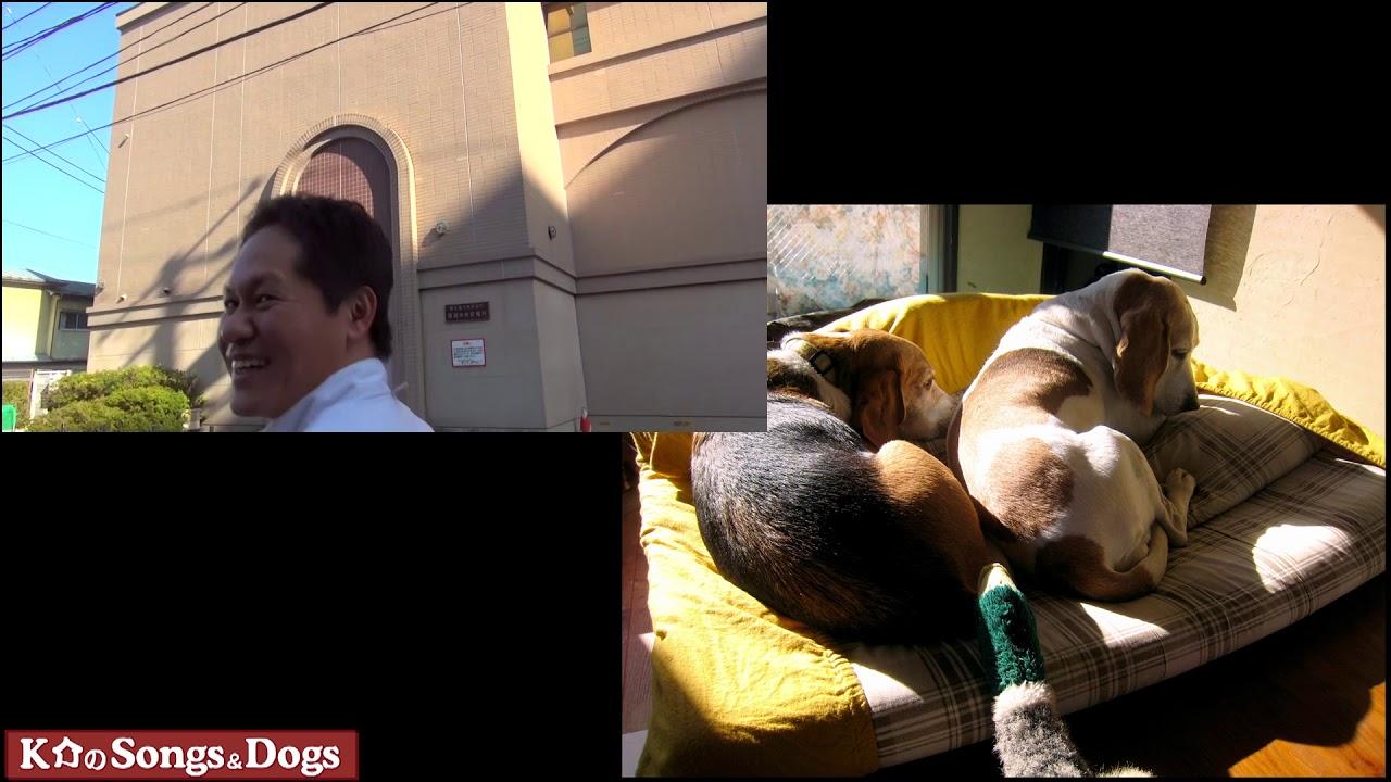 246th: K介のSongs&Dogs週末はミュージシャン