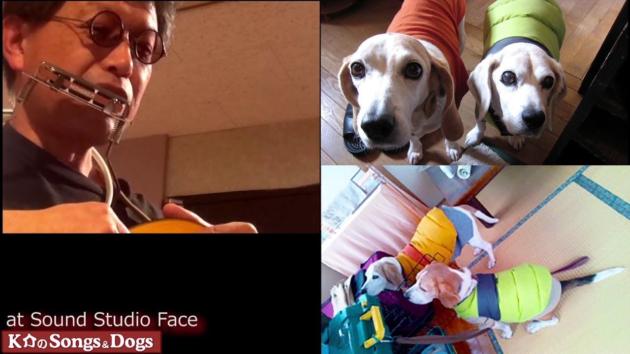 256th: K介のSongs&Dogs週末はミュージシャン
