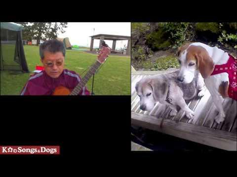 278th: K介のSongs&Dogs週末はミュージシャン