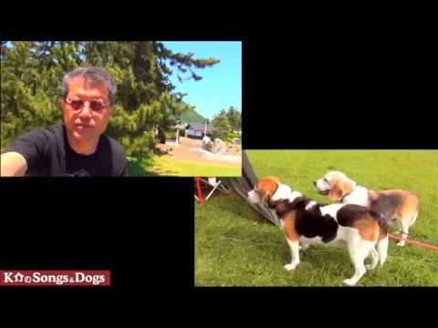 287th: K介のSongs&Dogs週末はミュージシャン