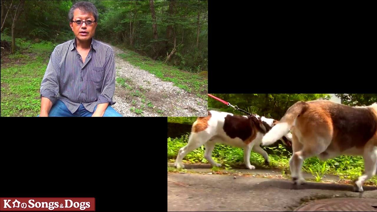 290th: K介のSongs&Dogs週末はミュージシャン