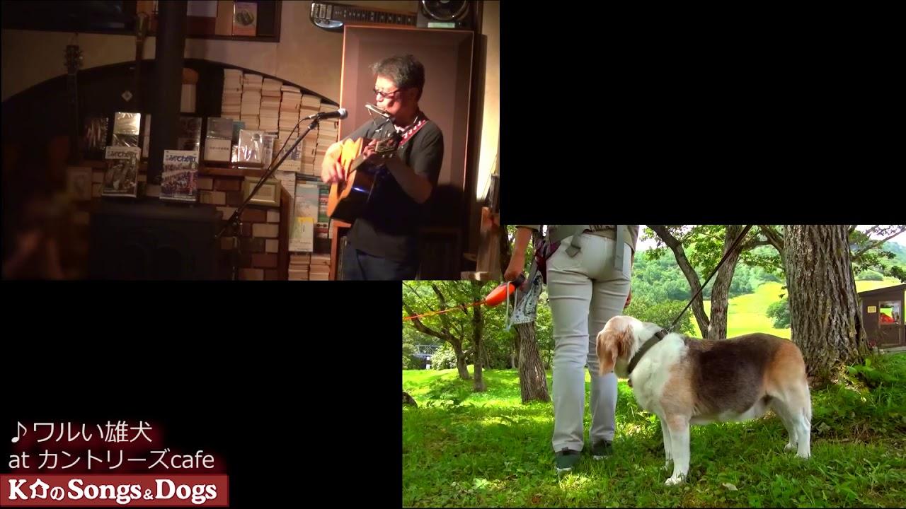 293th: K介のSongs&Dogs週末はミュージシャン