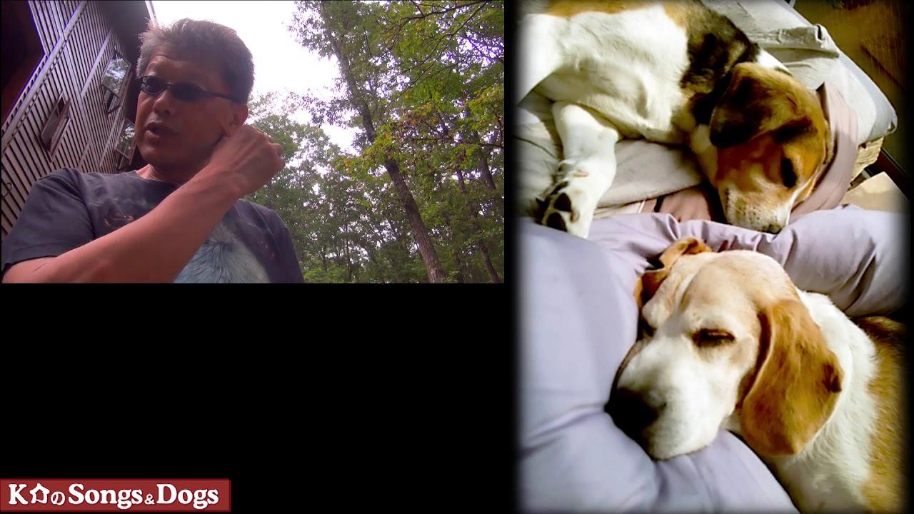 294th: K介のSongs&Dogs週末はミュージシャン