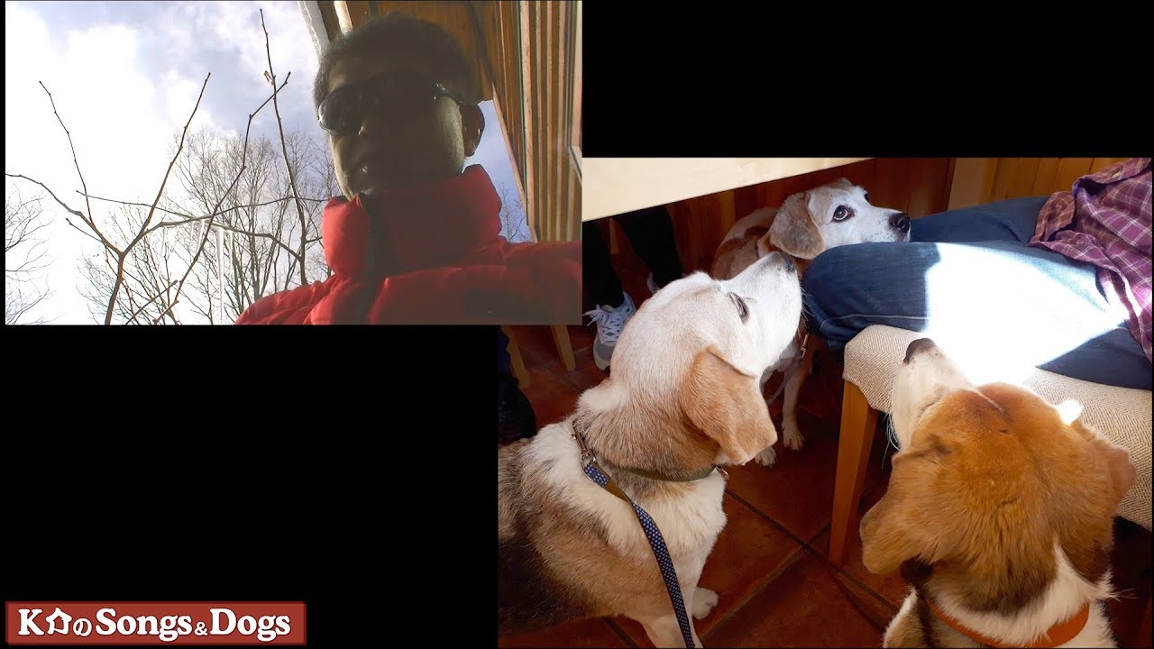 202th: K介のSongs&Dogs週末はミュージシャン