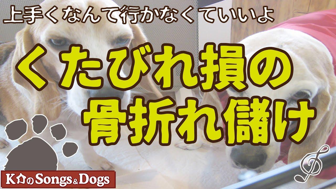 ♪くたびれ損の骨折れ儲け : K介のSongs&Dogs週末はミュージシャン