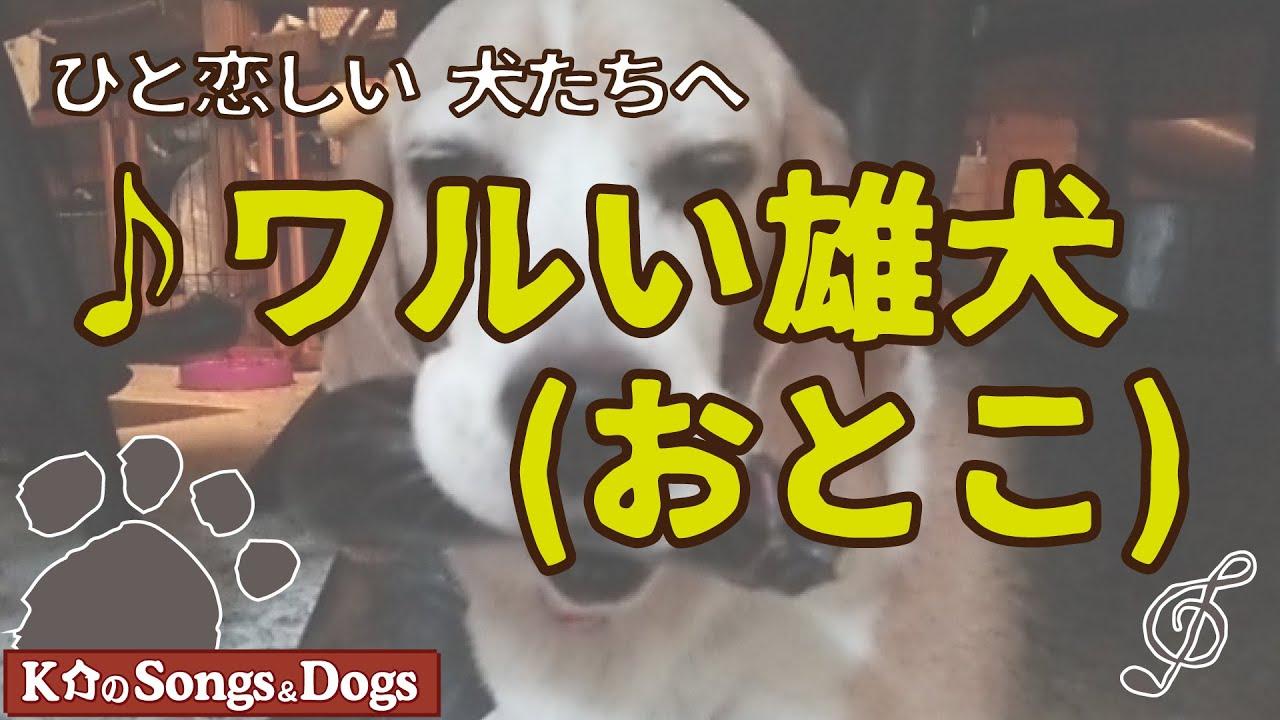 ♪ワルい雄犬(おとこ) : K介のSongs&Dogs週末はミュージシャン
