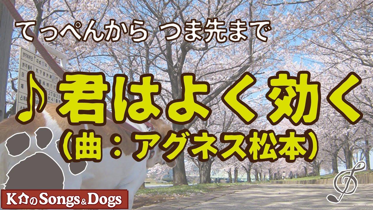 ♪君はよく効く(曲:アグネス松本): K介のSongs&Dogs週末はミュージシャン