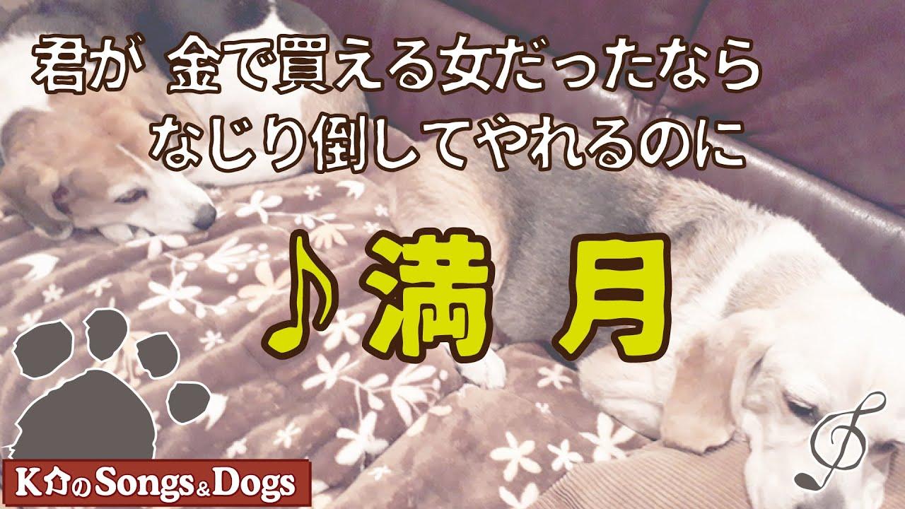 ♪満月 : K介のSongs&Dogs週末はミュージシャン