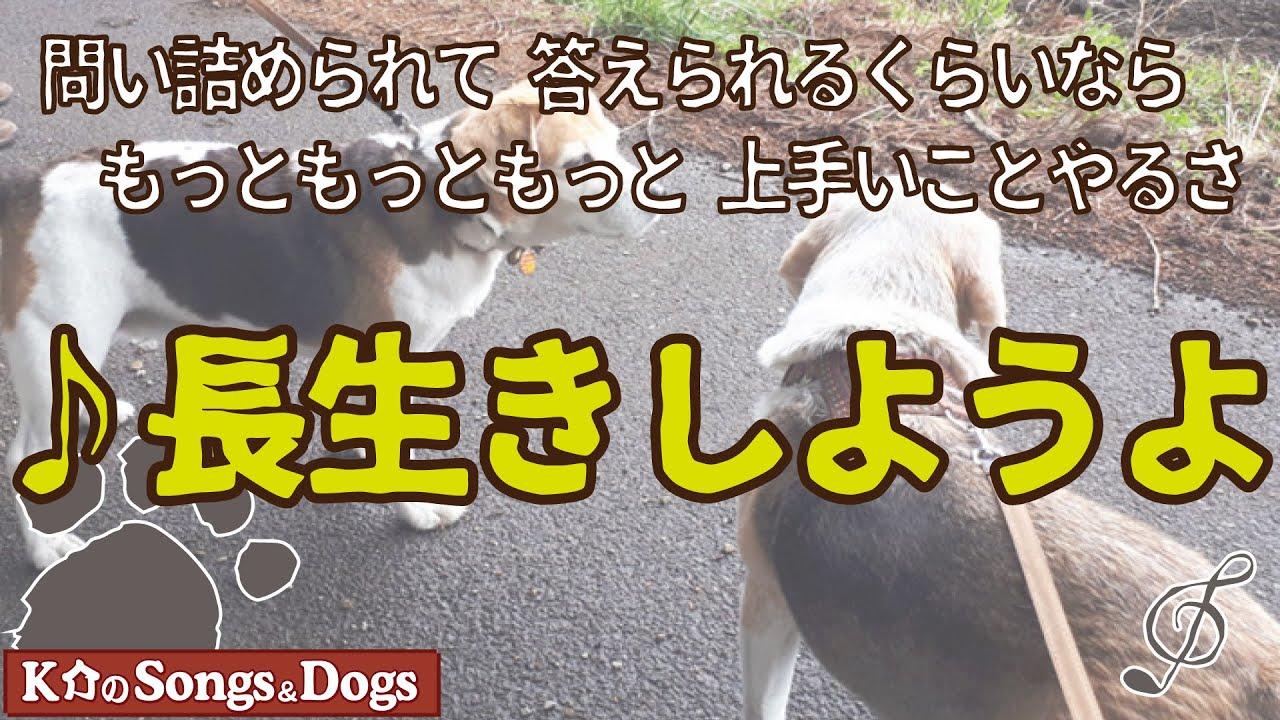 ♪長生きしようよ : K介のSongs&Dogs週末はミュージシャン