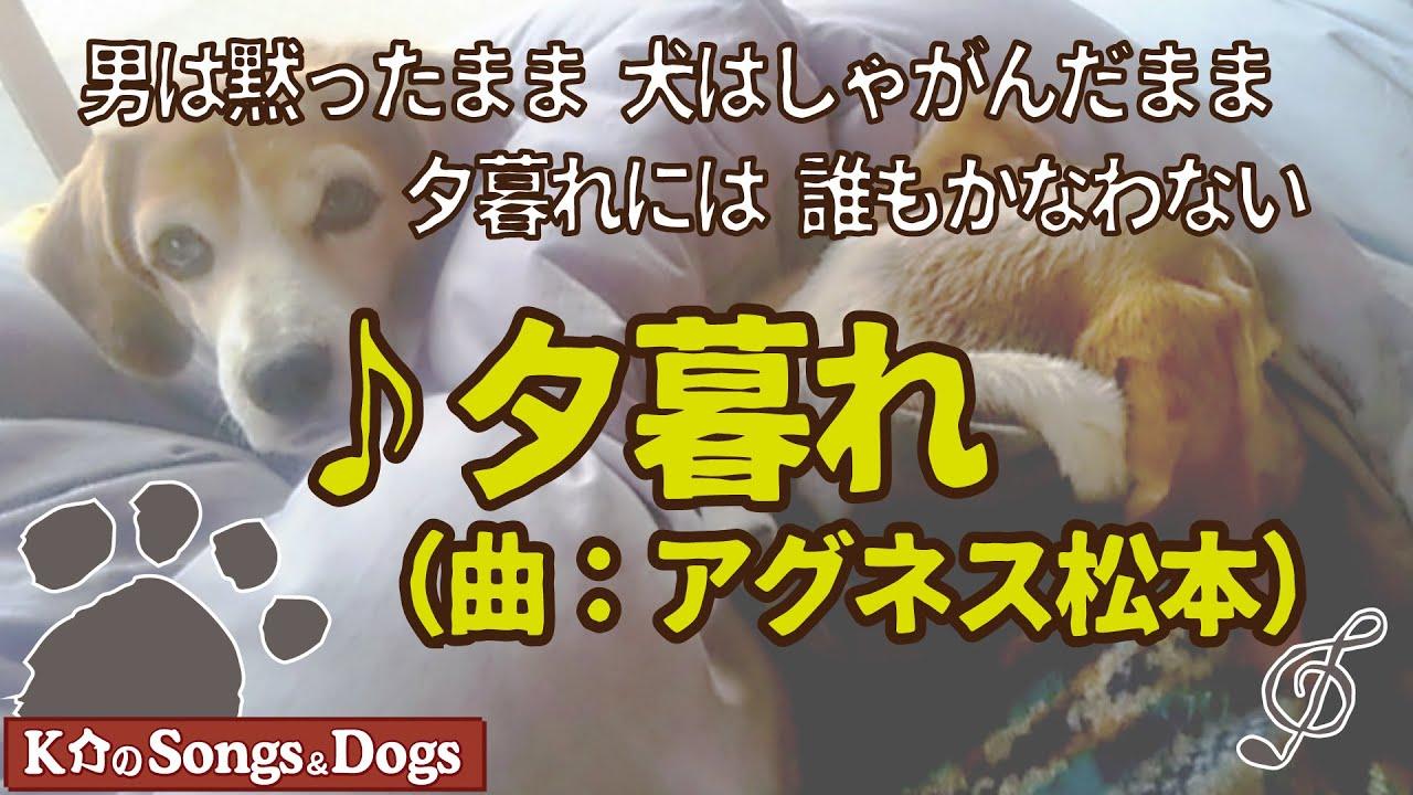 ♪夕暮れ(曲:アグネス松本)  : K介のSongs&Dogs週末はミュージシャン