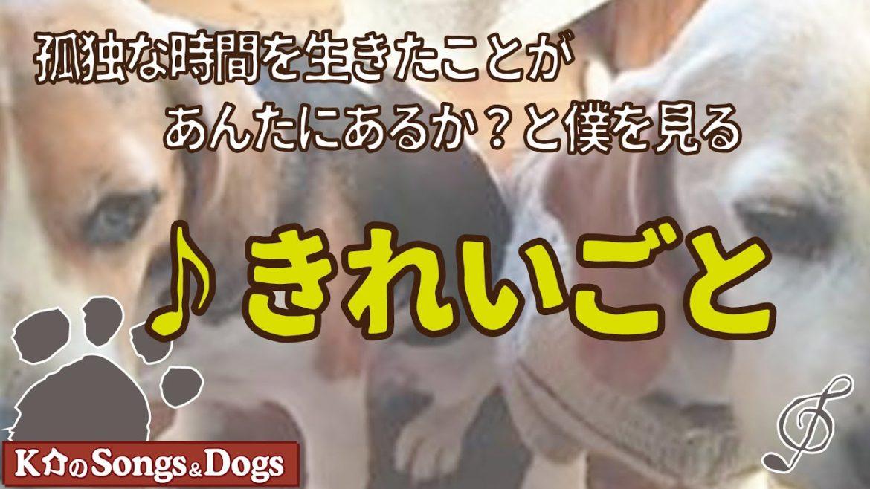 ♪きれいごと : K介のSongs&Dogs週末はミュージシャン
