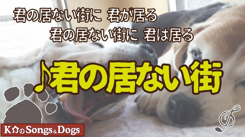 ♪君の居ない街 : K介のSongs&Dogs週末はミュージシャン 376