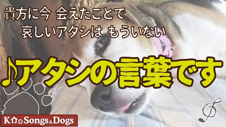 ♪アタシの言葉です : K介のSongs&Dogs週末はミュージシャン