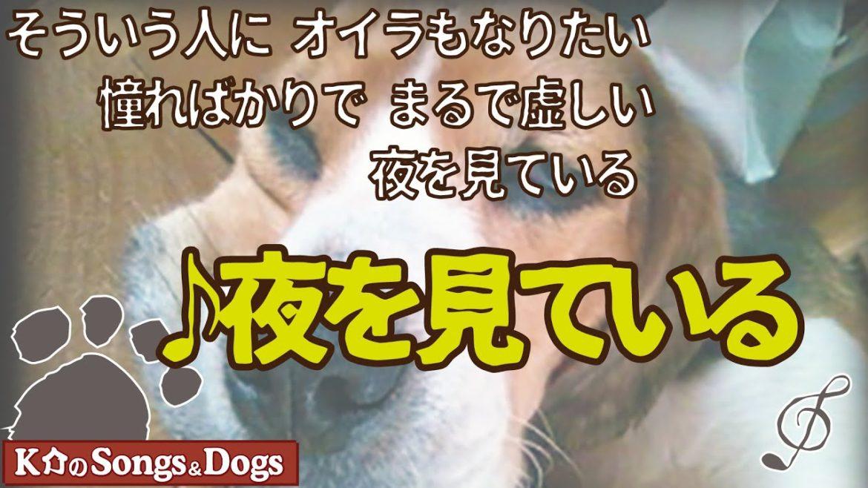 ♪夜を見ている : K介のSongs&Dogs週末はミュージシャン