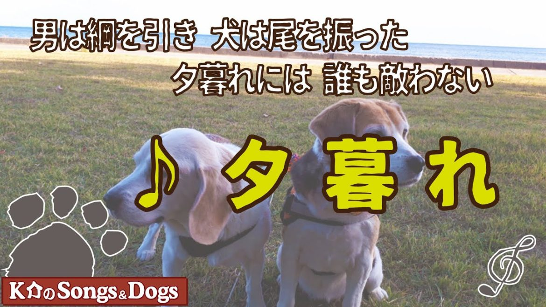 ♪夕暮れ(曲:アグネス松本): K介のSongs&Dogs週末はミュージシャン