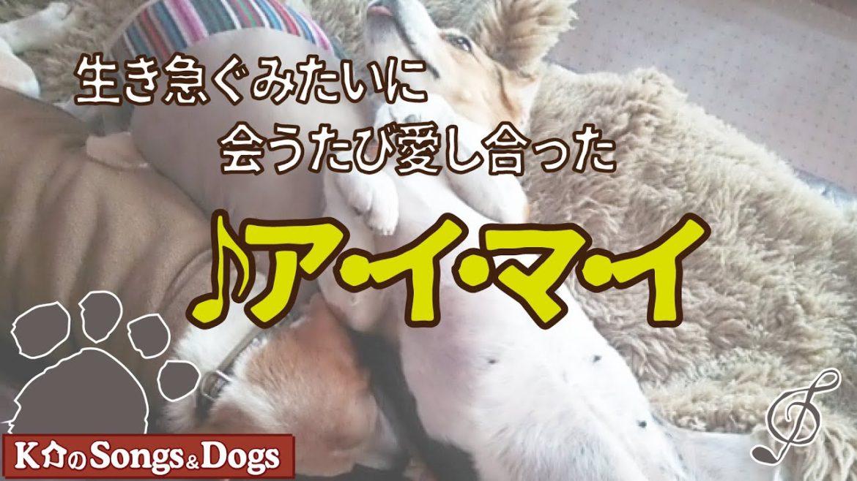 ア・イ・マ・イ: K介のSongs&Dogs週末はミュージシャン