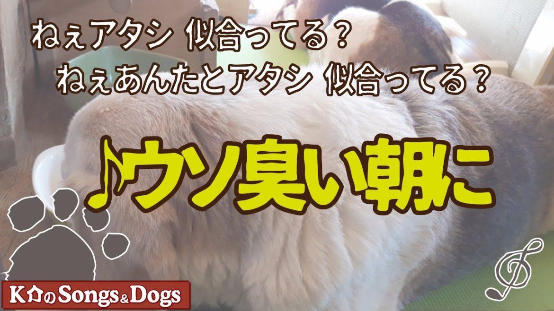 ♪ウソ臭い朝に : K介のSongs&Dogs週末はミュージシャン
