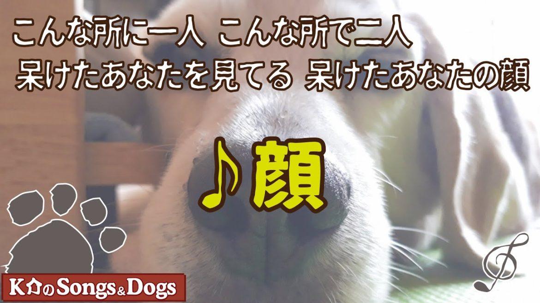 ♪顔 : K介のSongs&Dogs週末はミュージシャン