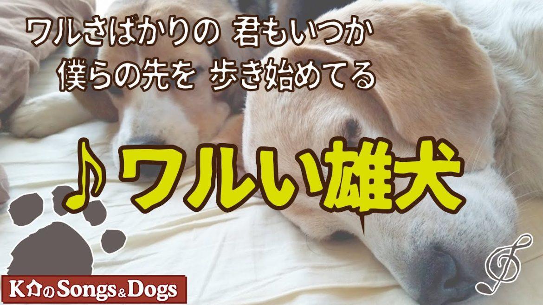 ♪ワルい雄犬 : K介のSongs&Dogs週末はミュージシャン
