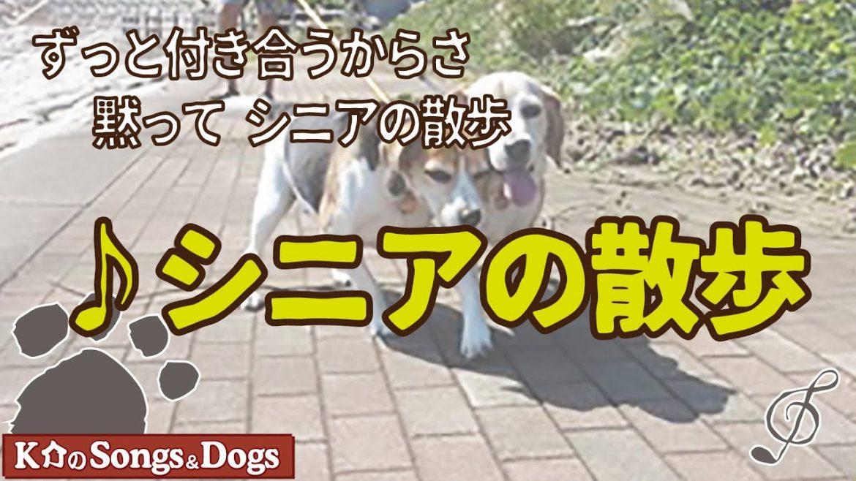 ♪シニアの散歩 : K介のSongs&Dogs週末はミュージシャン