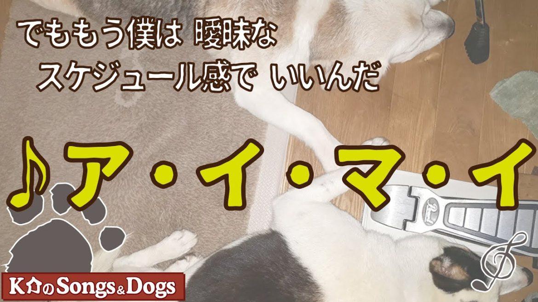 ♪ア・イ・マ・イ : K介のSongs&Dogs週末はミュージシャン