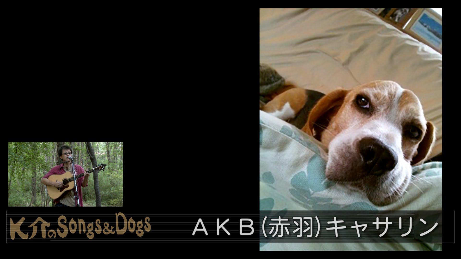 K介のSongs&Dogs週末はミュージシャン~31