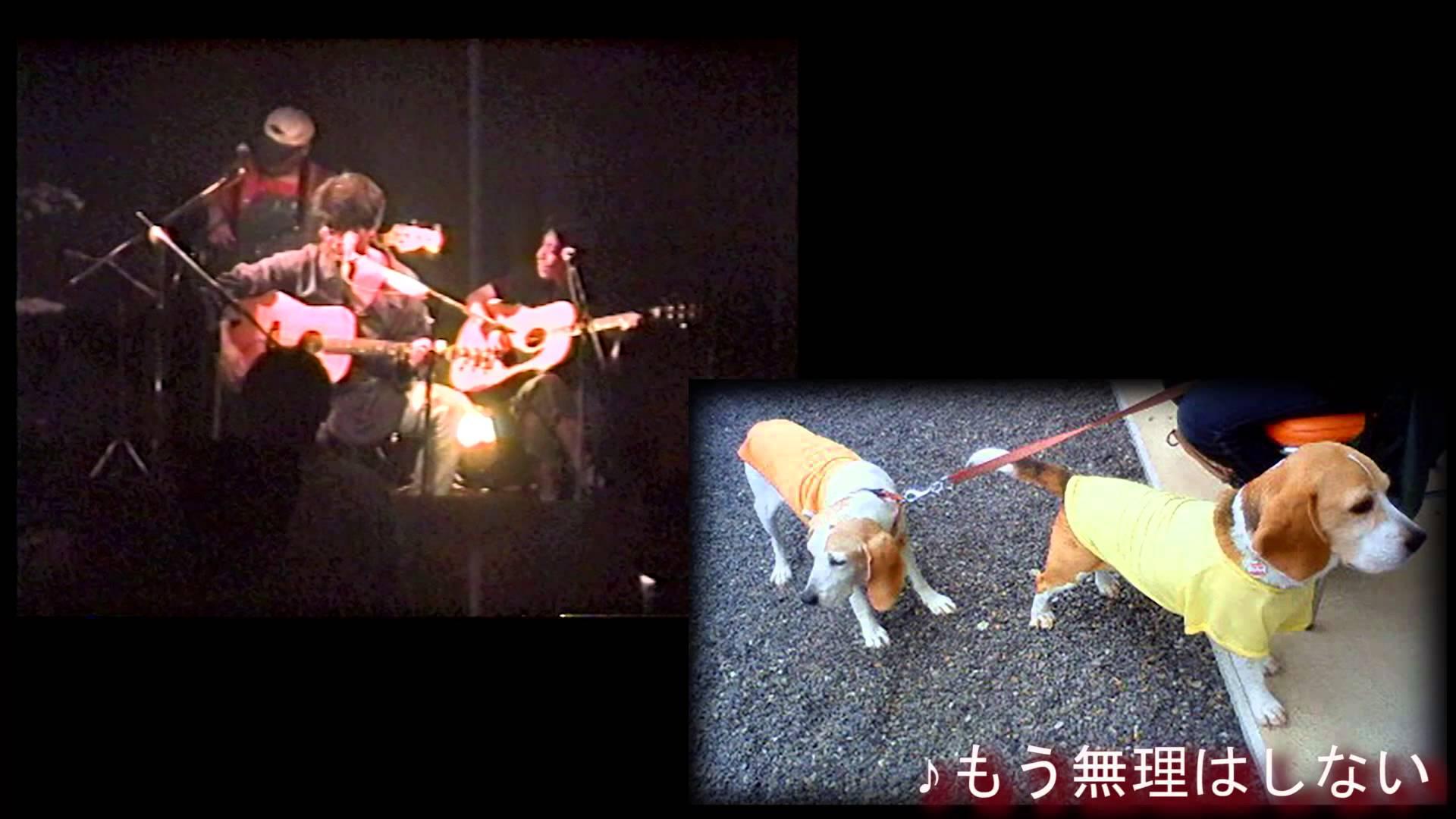 K介のSongs&Dogs週末はミュージシャン70