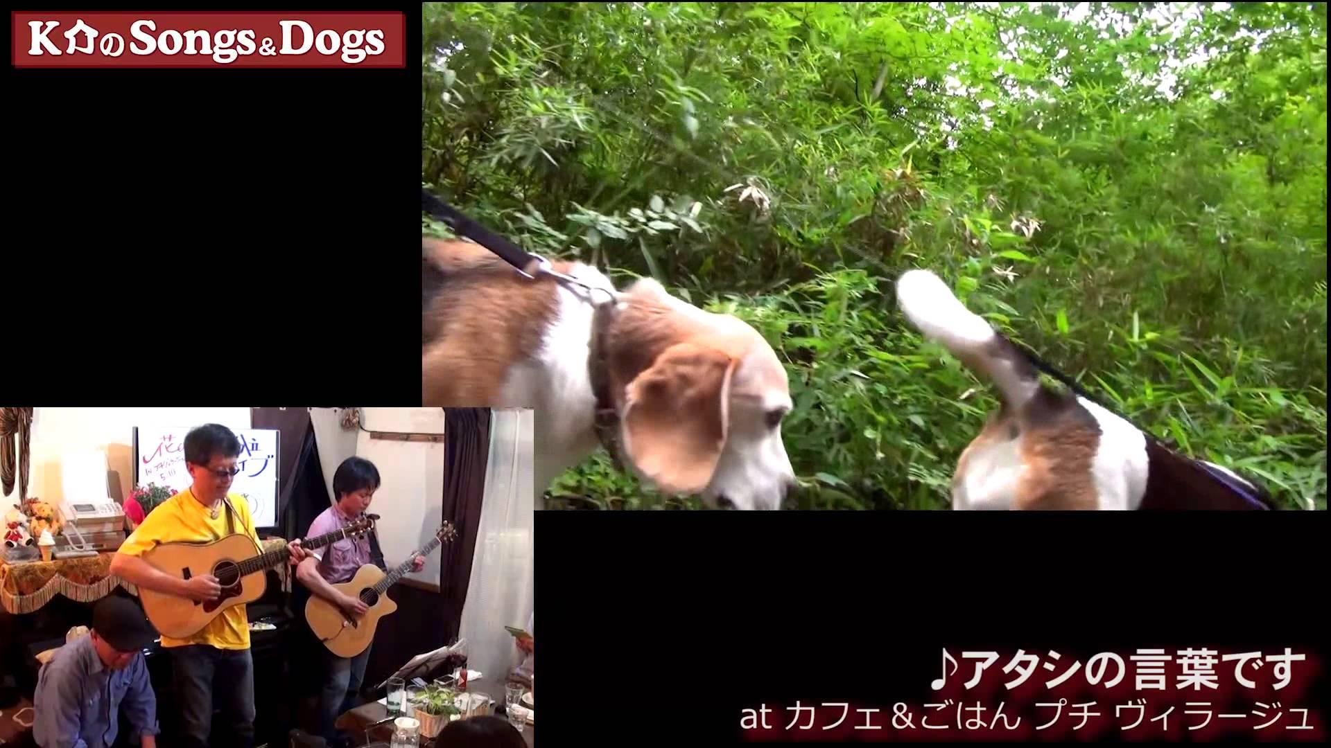K介のSongs&Dogs週末はミュージシャン75
