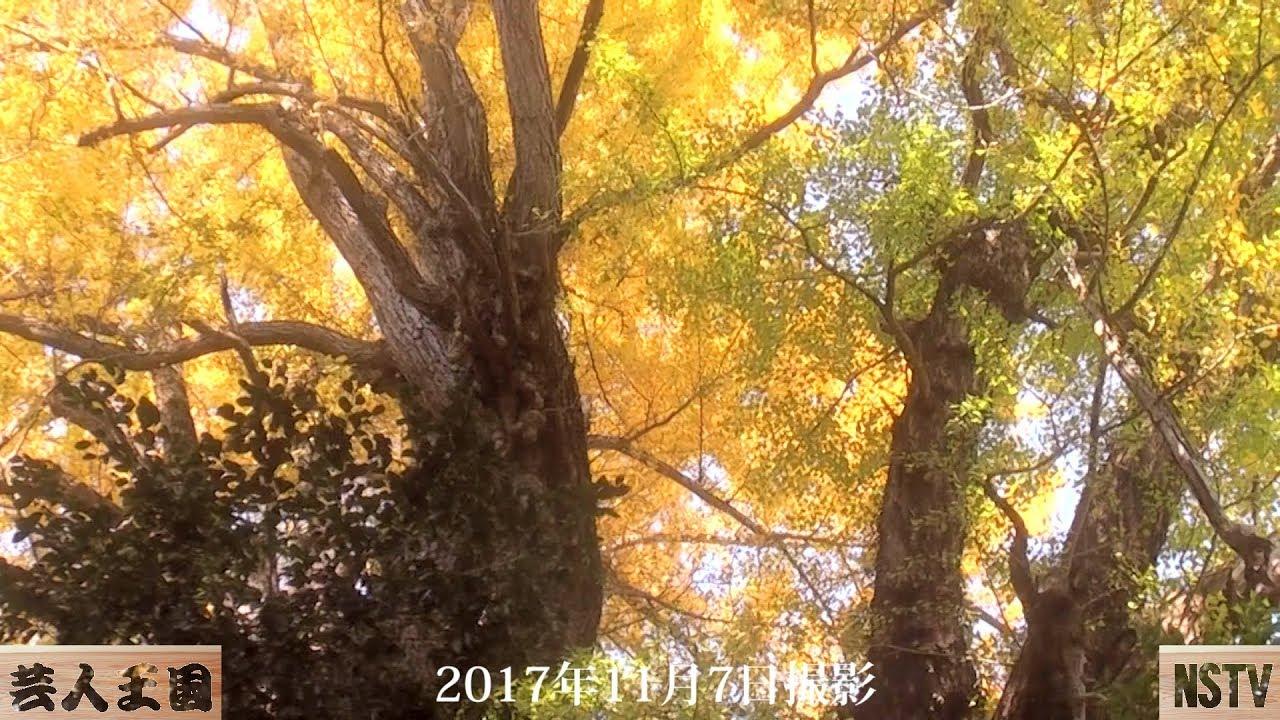 大田原11月の名木ハイキング(上)~那須お笑いクラブ