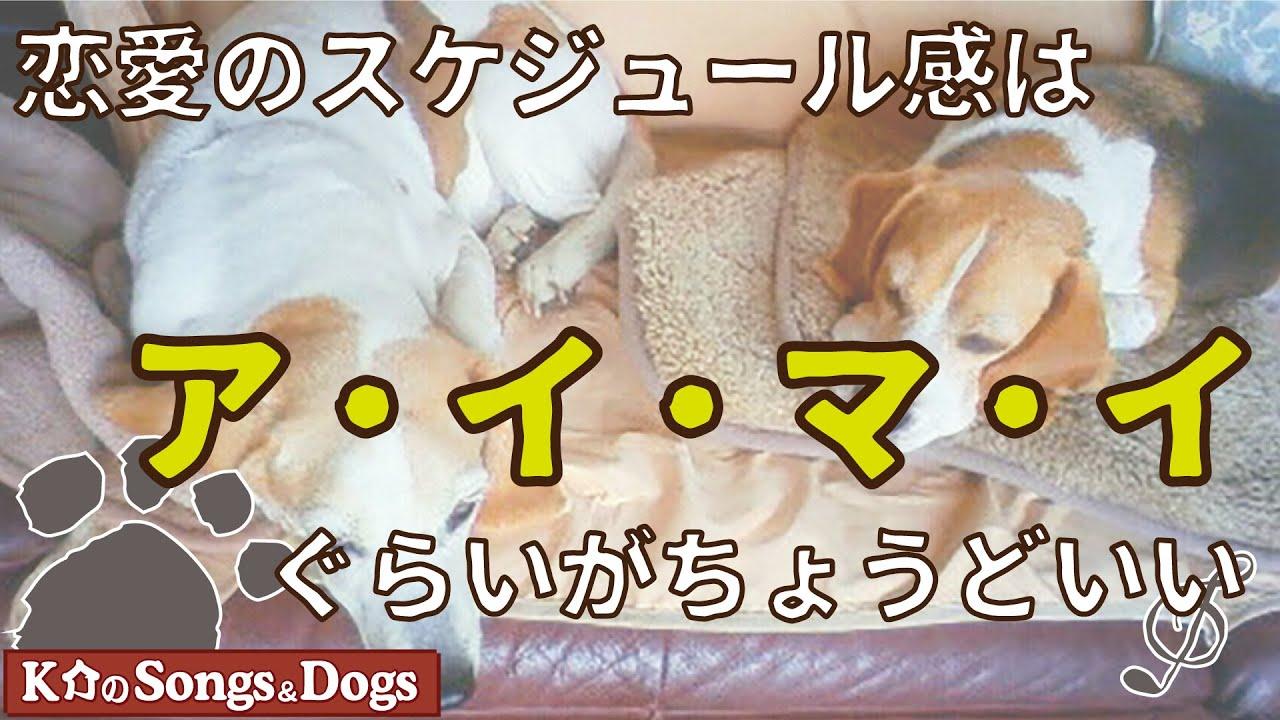 恋愛の スケジュール感は ア・イ・マ・イ ぐらいが ちょうどいい : K介のSongs&Dogs週末はミュージシャン