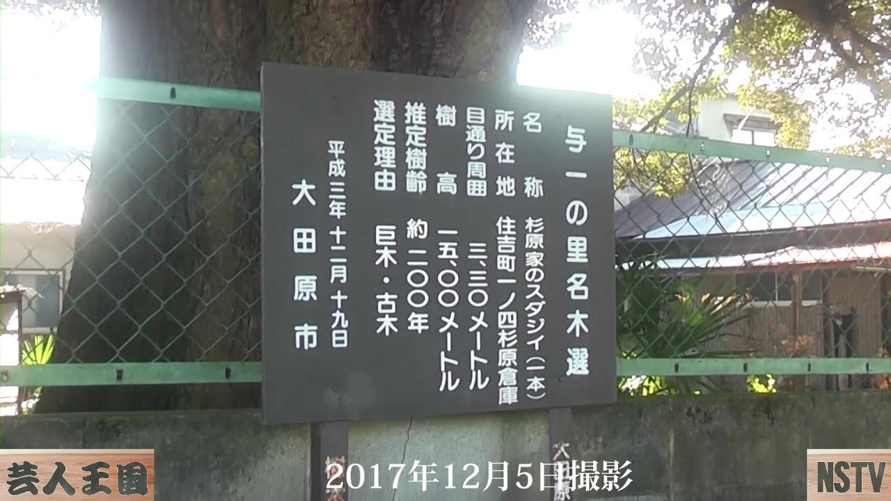大田原12月の名木ハイキング~那須お笑いクラブ