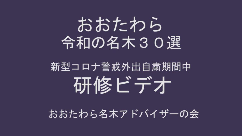 大田原名木夏研修用~令和の樹木季臨