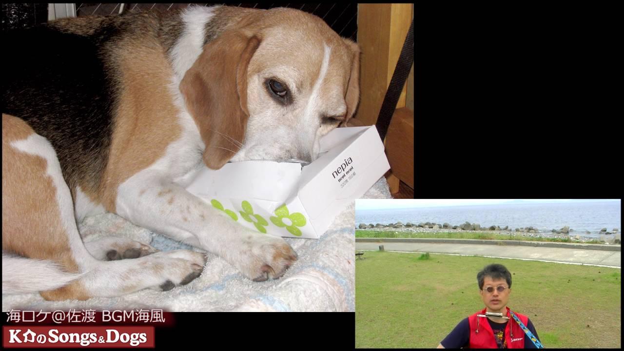 124th: K介のSongs&Dogs週末はミュージシャン