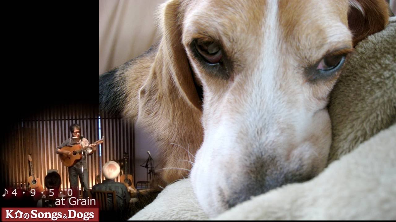 135th: K介のSongs&Dogs週末はミュージシャン